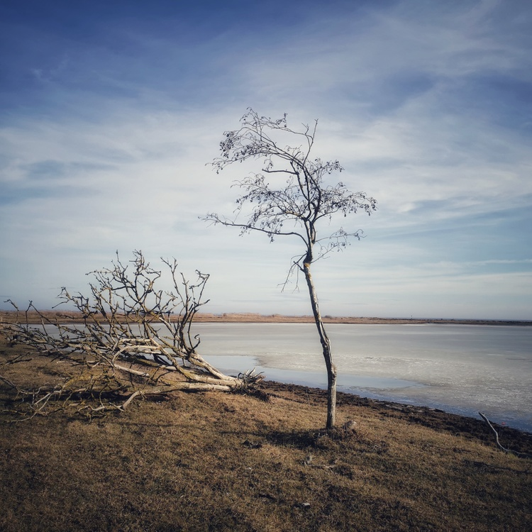 Print Ensamt träd