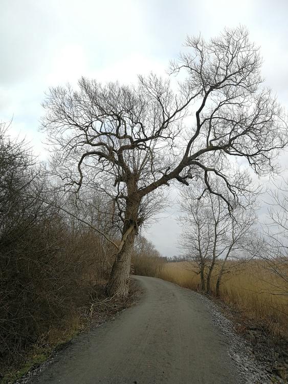 Print Trädet