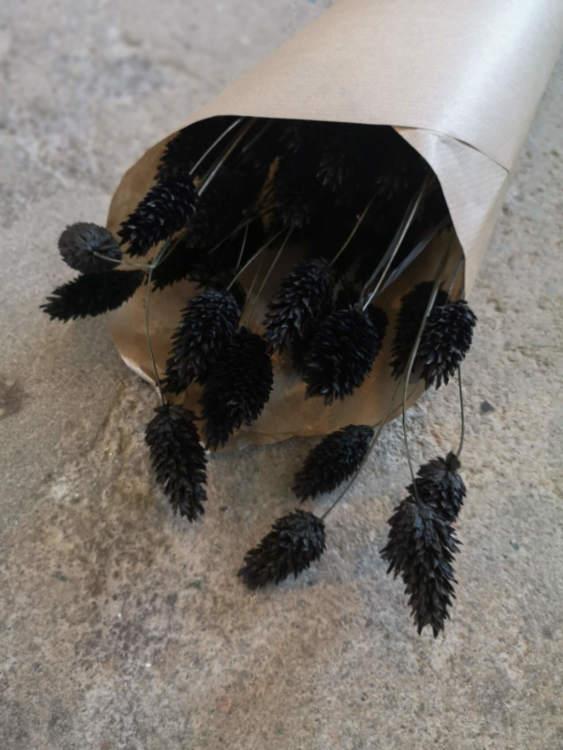 Phalaris svart