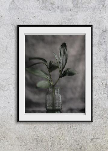 Soul Image - Green Leaf