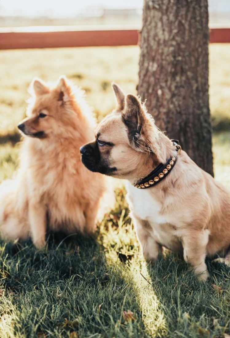 Delight Dog Collar #4