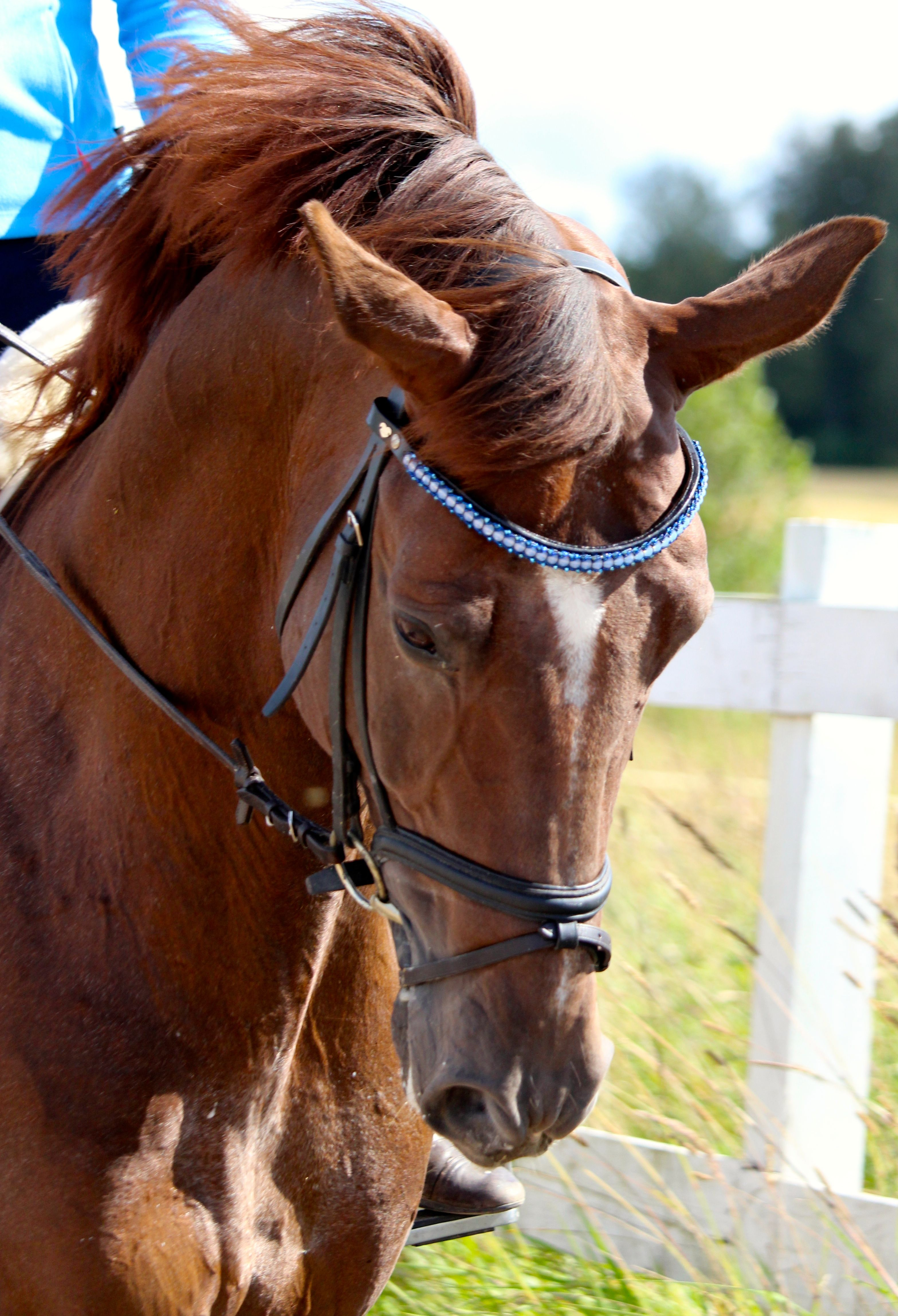 Passion Browband #7