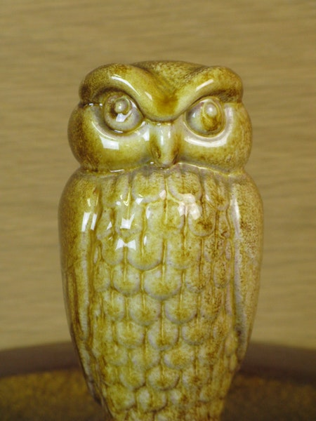 owl in a bowl 97