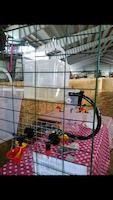 VATTENKOPP med vinkelfäste till nät /vägg åt höns, kalkon, ankor, vaktel.