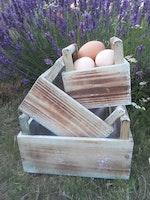 Lådor trä äggkorg 3 olika rede