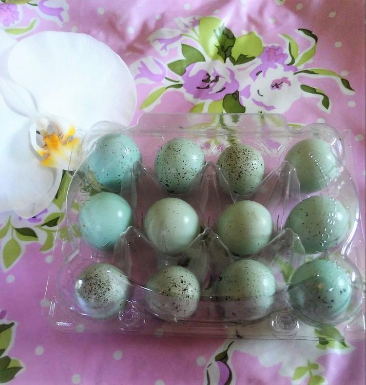 Äggkartong i pvc för 12 vaktelägg 10st/50st paket