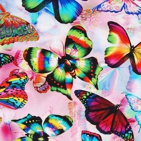 Regnbågsfjärilar