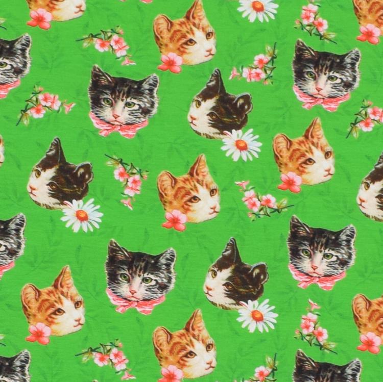 Katter och blommor