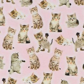 Kattungar på rosa botten