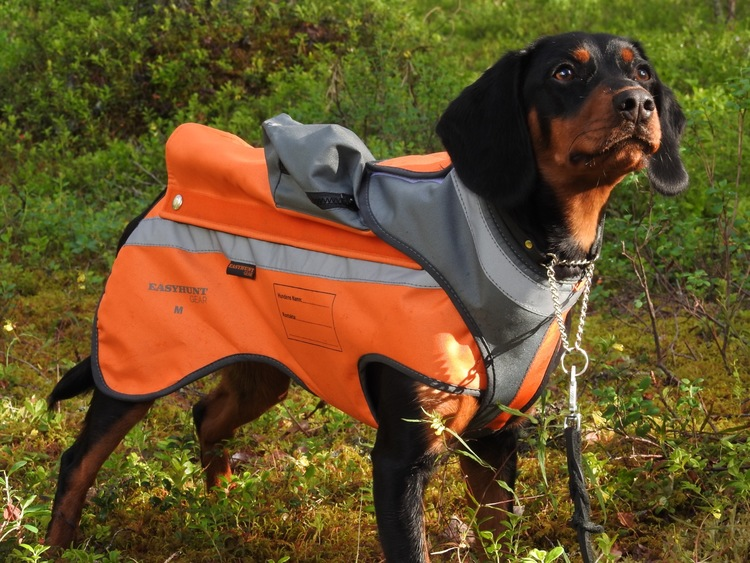 Protective vest for dog