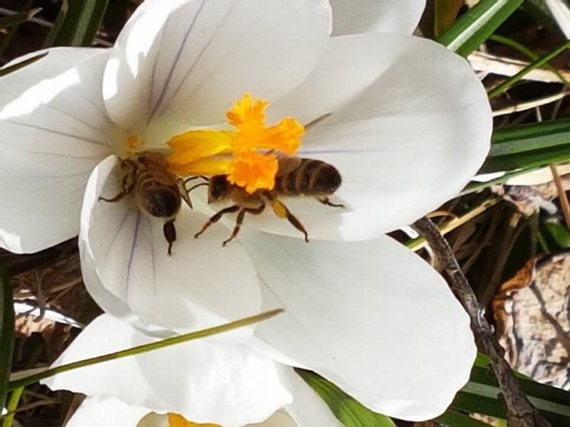 Hur det kom sig att jag började med bin.