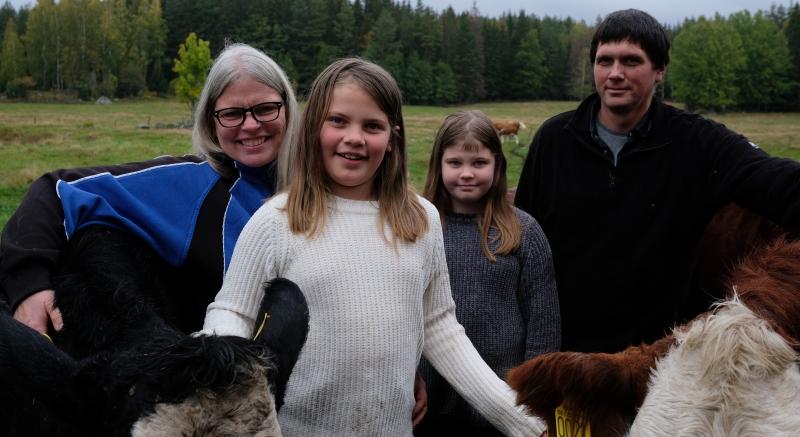 Annelunds Eko nöt och lamm. Lite bakgrund och vår verksamhet som småskaliga lantbrukare.