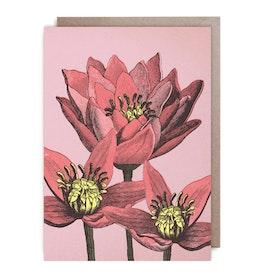 Kort - Bright red flowers