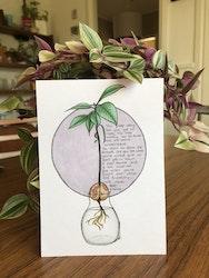 Växtvän Avokado