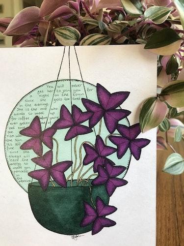 Växtvän Oxalis