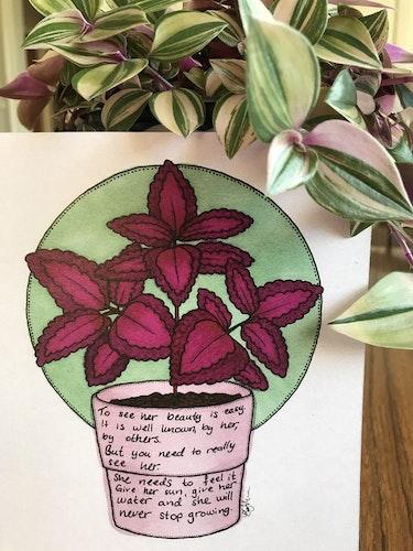 Växtvän Palettblad