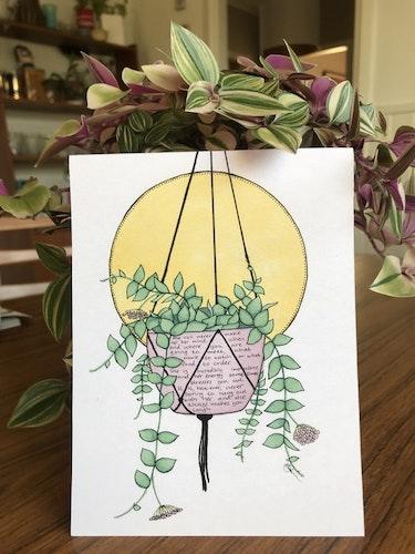 Växtvän Hoya
