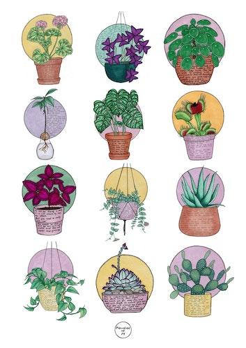 Växtvänner
