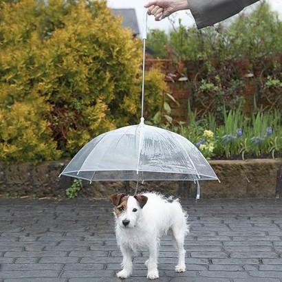 Hundparaply