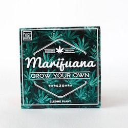 Växa din egen - Marijuana