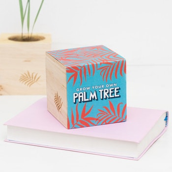 Grow Your Own Palmtree - Odla kit