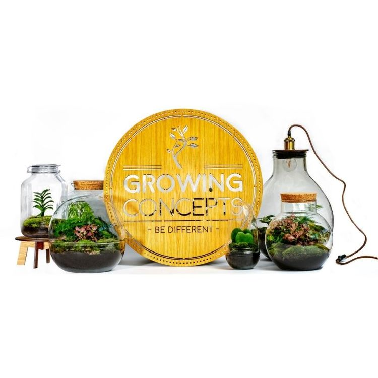 GROWING CONCEPTS - DIY HÅLLBAR ECOSYSTEM- FICUS GINSENG