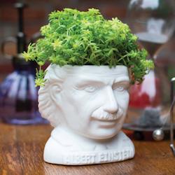Kruka Albert Einstein