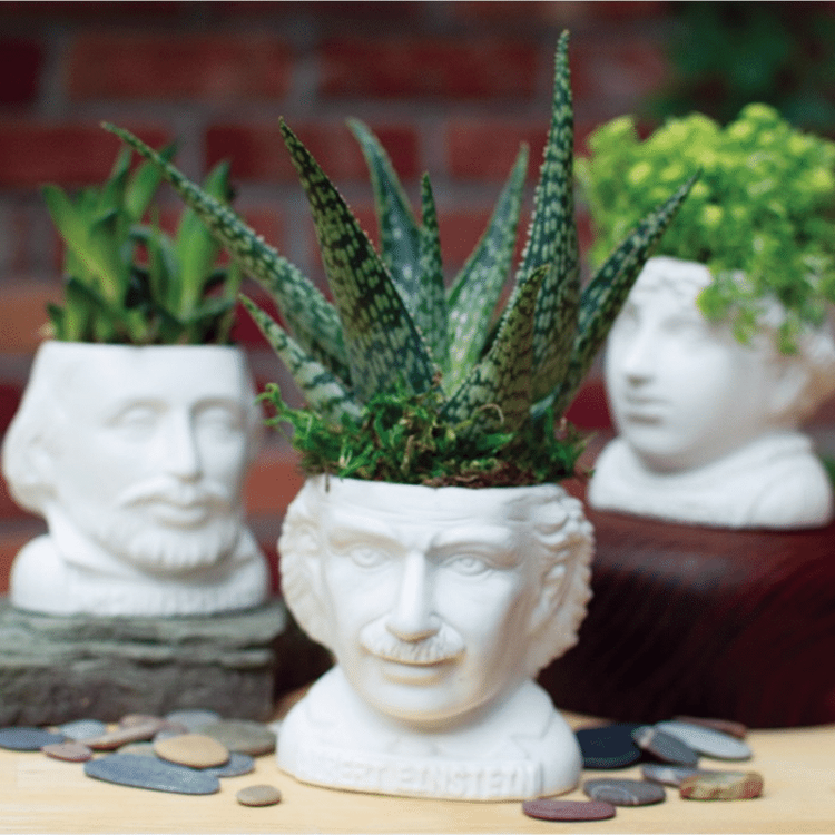 kaktus Kruka Jane Austen