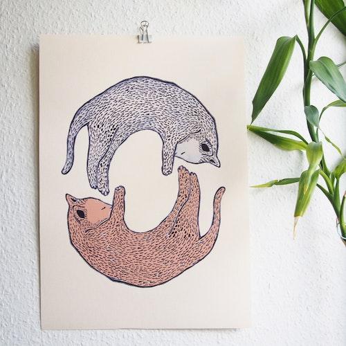 Katter, poster