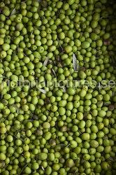 Olives green