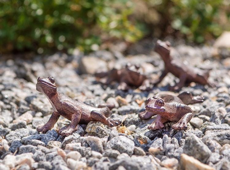 Geckoödla att inreda med ute och inne.