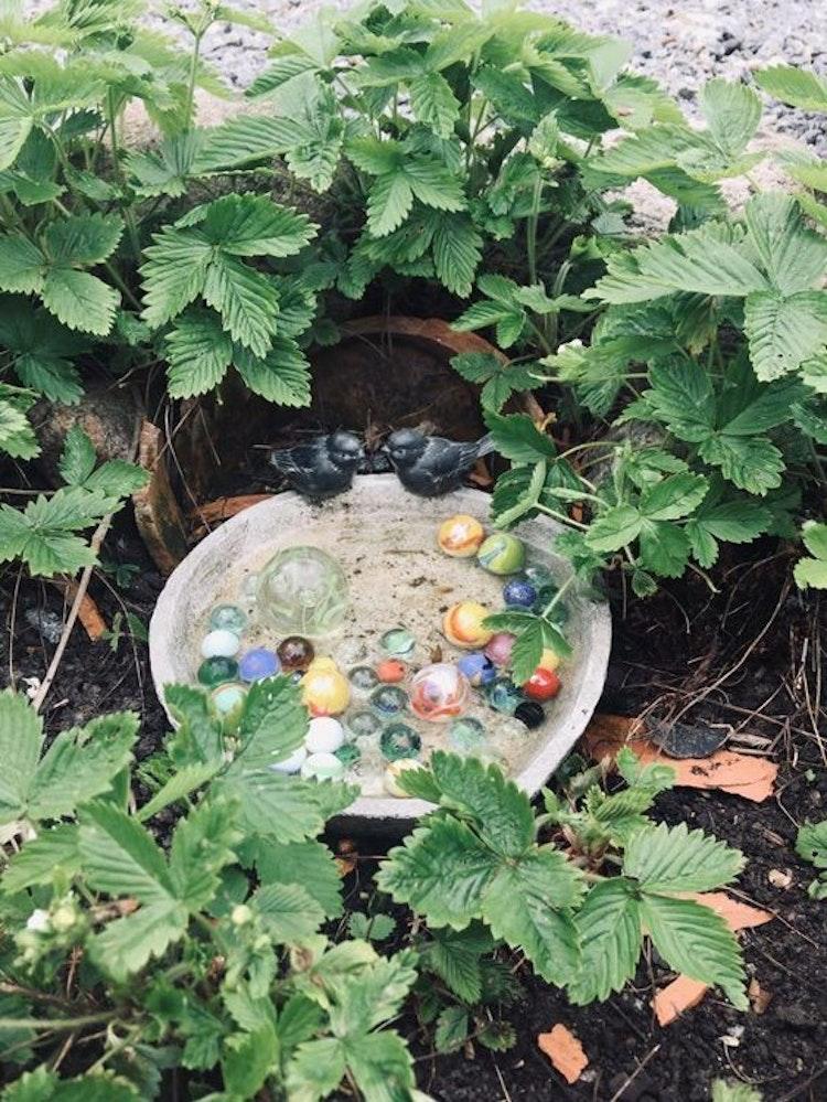 Lilla Täppan fågelbad för fåglar och insekter.