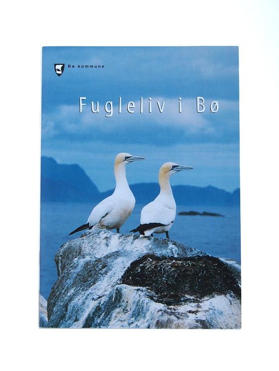 Fugleliv i Bø