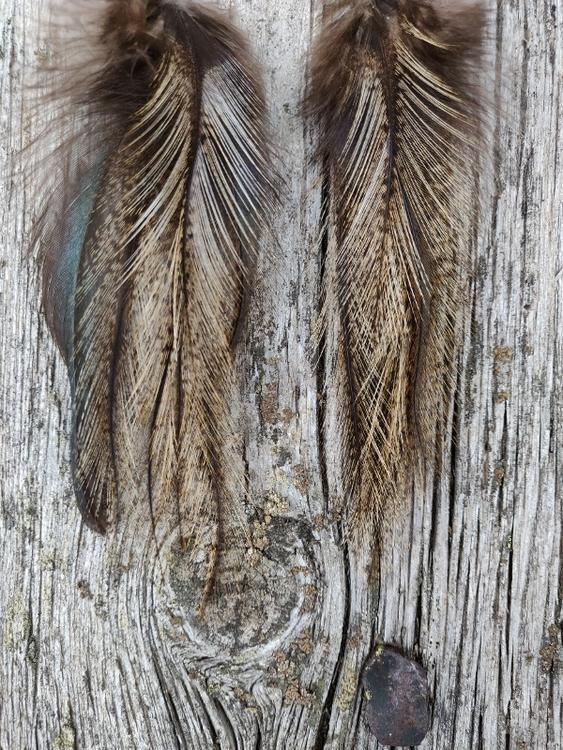 Fjäderörhängen Par #2060