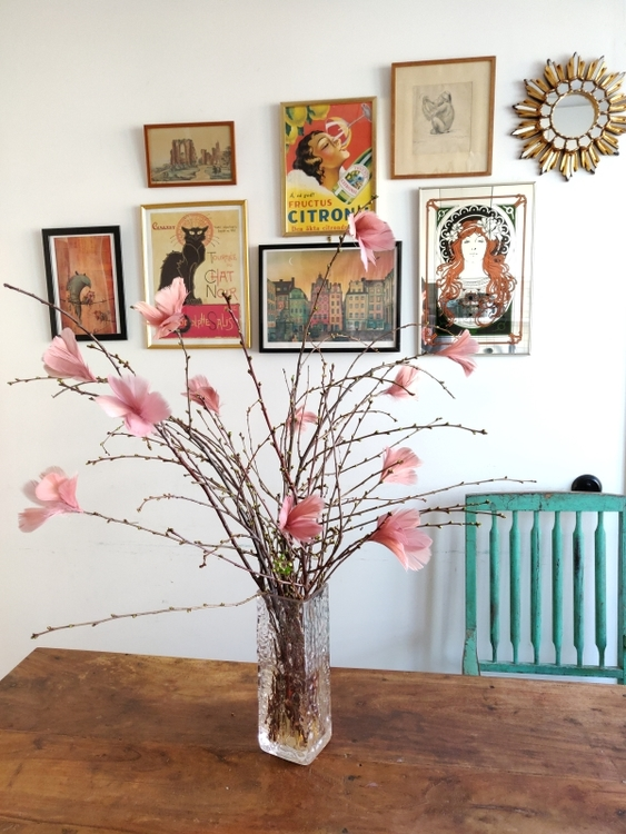 Fjäderblommor Magnolia