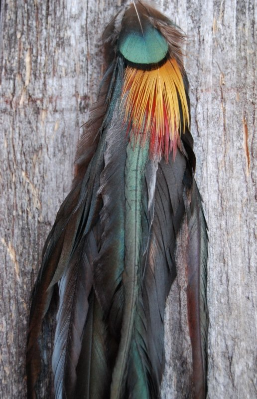 The original Single Feather earring