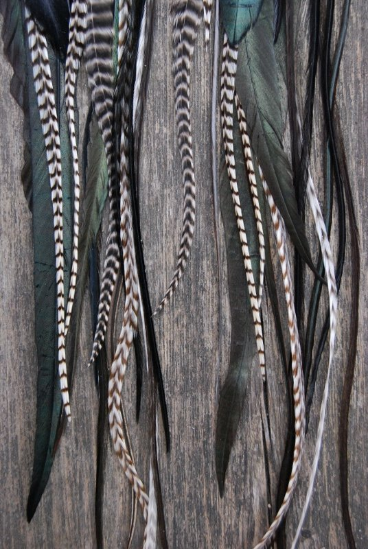 Magic Feather Earrings