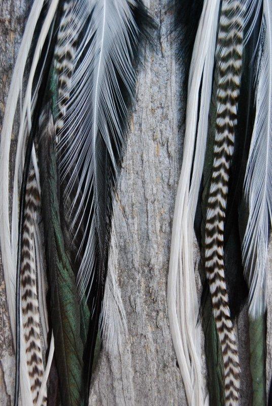Crisp Feather Earrings