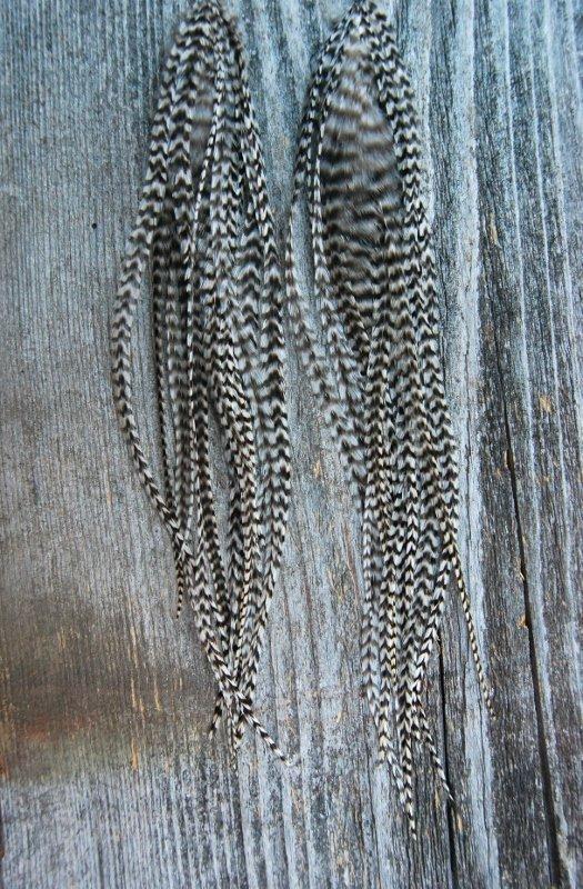 Bae Feather Earrings