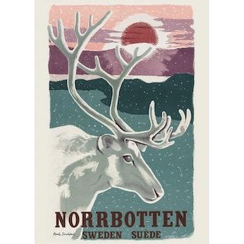 Norrbotten Poster med ren 50'70