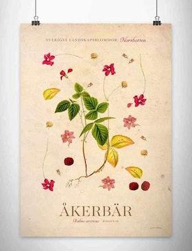 Poster Åkerbär 30*40