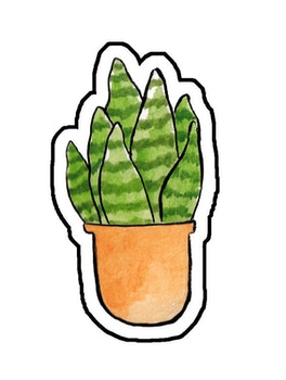 Sticker Sansevieria