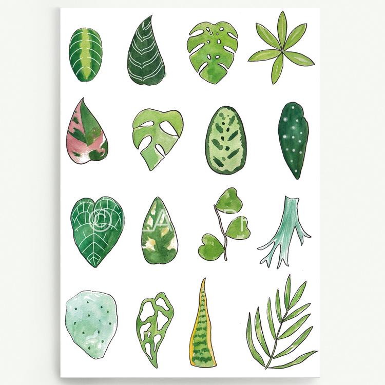 Foliage A4