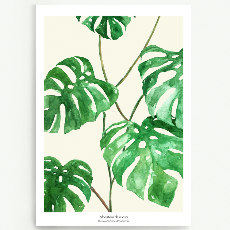 Ljus Monstera deliciosa